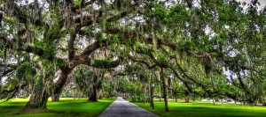 Spanish-moss-tree-alley-at-Jekyll-Island